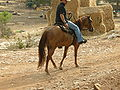 Israel National TrailDSCN4404.JPG