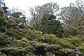 Japanese Garden 10 (214350007).jpeg