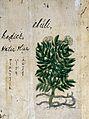 Japanese Herbal, 17th century Wellcome L0030071.jpg