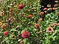Japanese flowers P8149159.jpg