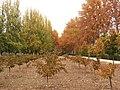 Jardín del Príncipe - panoramio (28).jpg