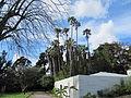 Jardim Botanico Tropical (14005306911).jpg