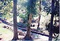 Jardin de Pamplemousses (3001822839).jpg