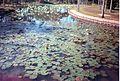 Jardin de Pamplemousses (3005313848).jpg