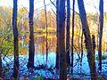 Jezioro Kusina Gródź.jpg