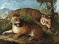Johann Wenzel Peter - Royal Bengal Tigers.jpg