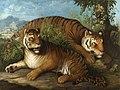 Johann Wenzel Peter - Royal Bengal Tigers.jpg