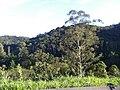 Juquitiba - SP - panoramio (19).jpg