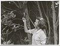 Kapiti Island - Miss Lindsey, caretaker's daughter feeds the Kaka.jpg