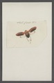 Kend - Print - Iconographia Zoologica - Special Collections University of Amsterdam - UBAINV0274 042 05 0028.tif