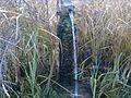 Kispuszta forrás - panoramio.jpg