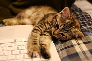 Kitten with laptop - 278017185.jpg