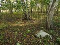 Kivikalme, Lääne-Nigula vald Uugla küla Veskimäe 4.jpg