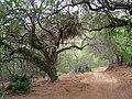 Koko Crater Botanical Garden - IMG 2231.JPG