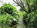 Korina 2012-06-12 Heracleum mantegazzianum 4.jpg