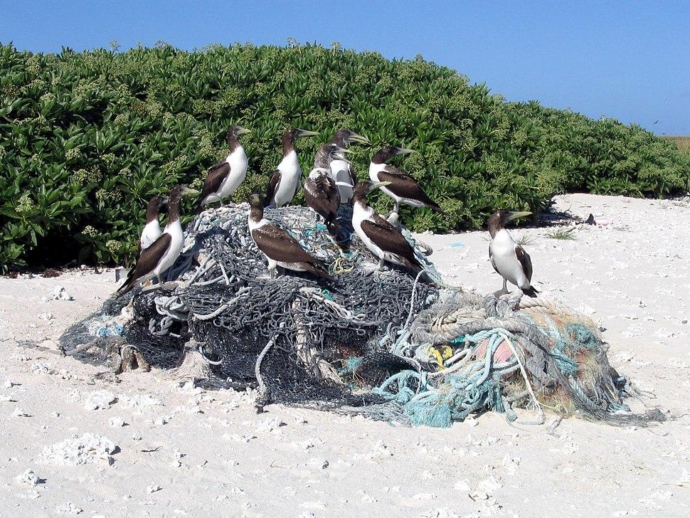 Kure Marine Debris