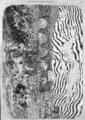 L'Illustration - 1858 - 117.png