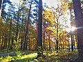 L'automne - panoramio (1).jpg