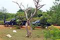 LK-yala-jeeps.jpg