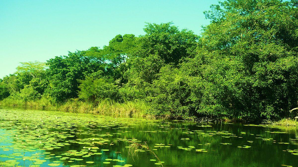 Los Petenes, uno de los atractivos de Campeche más impresionantes