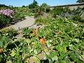 La Bussiere Garden 02.jpg