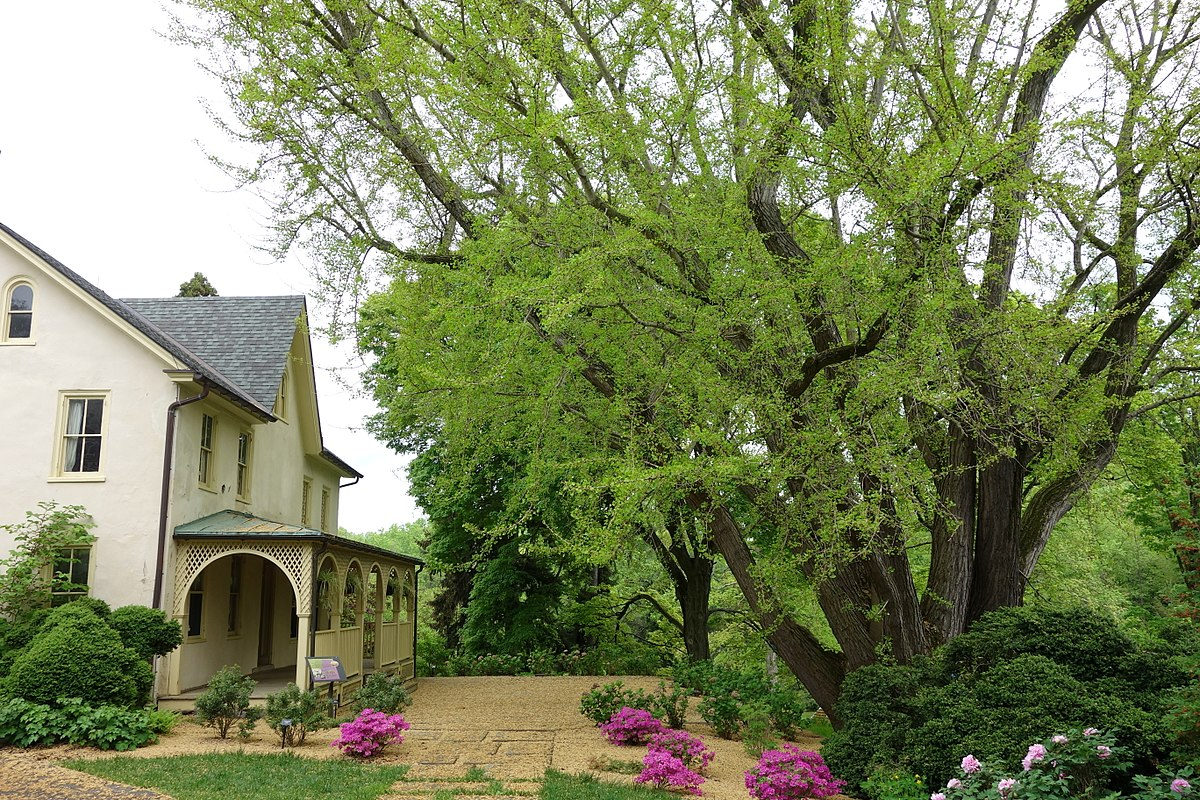Picture of: File Lachford Hall Tyler Arboretum Dsc01892 Jpg Wikimedia Commons