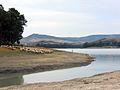 Lago di San Giuliano, gregge.jpg