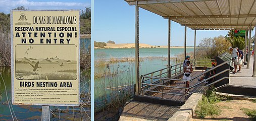 Lagoon of Maspalomas.jpg