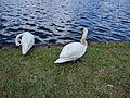 Lake Eola (30284581041).jpg