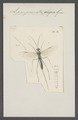 Lampronota - Print - Iconographia Zoologica - Special Collections University of Amsterdam - UBAINV0274 046 03 0085.tif
