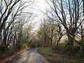 Lane on Tregeare Down - geograph.org.uk - 719001.jpg
