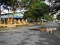 Laoac,Pangasinanjf8644 10.JPG