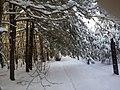 Las na północ od drogi - panoramio.jpg