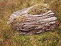 Layered sandstone boulder - geograph.org.uk - 1510402.jpg