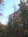 Leninsky 41-66 - IMG 3213 (31836952828).jpg