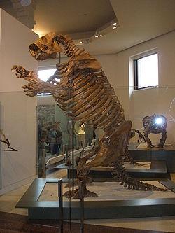 8e9e381ff43b7 Lestodon - Wikipedia