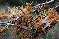 Lichens (4229053468).jpg