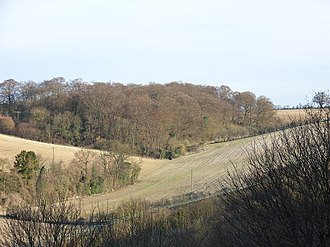 Gomm Valley - View of Little Gomm's Wood from Gomm Valley