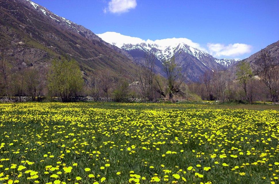 Spring landscape of the Cerdanya in Llívia.