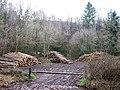 Log piles in old quarry - geograph.org.uk - 655102.jpg