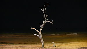 Lonely tree at ocean edge