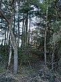 Longton Wood - geograph.org.uk - 149182.jpg