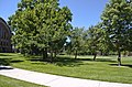 Looking WSW across Quad from Renne Library - Montana State University - 2013-07-09.jpg