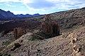 Los Roques - panoramio.jpg