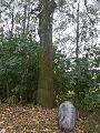 Maas bij Maren-Kesel, de bomen.jpg