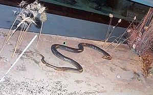 Natural History Museum (Thessaloniki) - Image: Macedonian Museums 65 Fysikhs Istorias Thessalonikhs 286