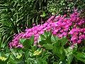Madeira - Monte - Jardim Tropico (2092629531).jpg