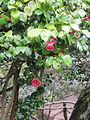 Madeira em Abril de 2011 IMG 2265 (5664602839).jpg