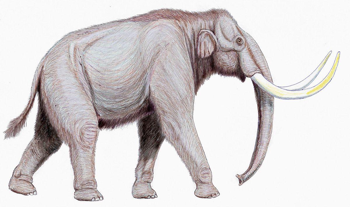 Sztyeppei mamut – Wikipédia - 160.1KB