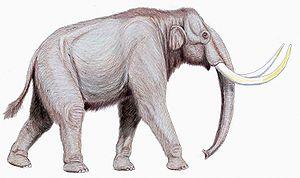 Steppe mammoth - Restoration